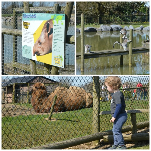 folly farm and zoo, pembrokeshire