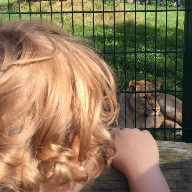 A great day again follyfarmwales the lions are just awesomehellip