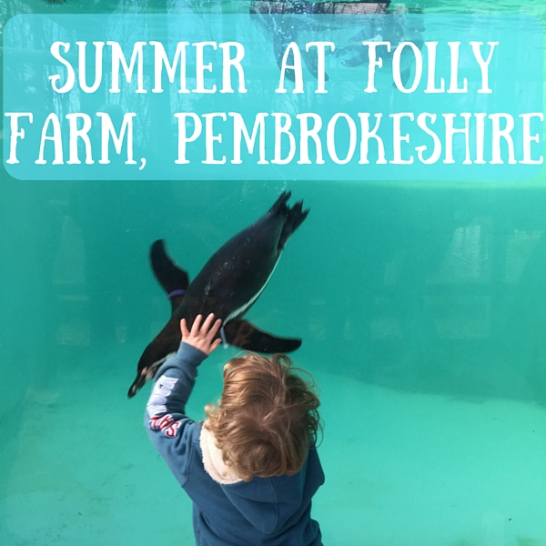 summer at folly farm, pembrokeshire