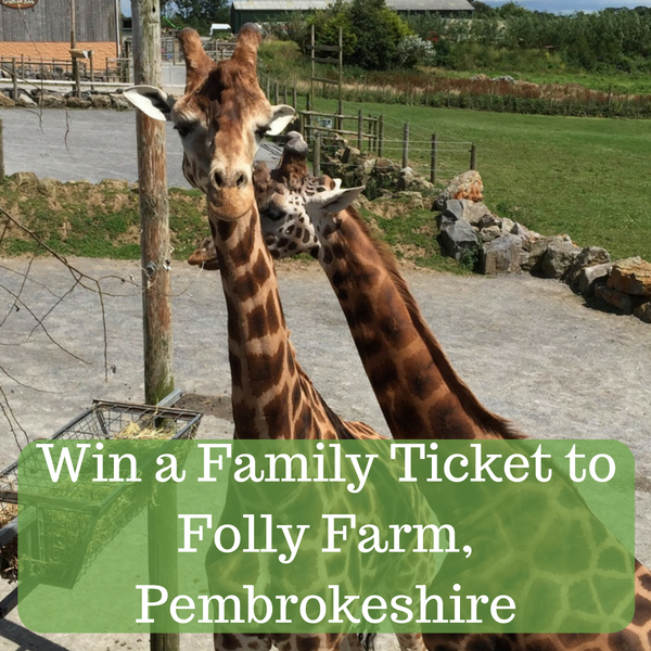 Win a Family Ticket to Folly Farm, Pembrokeshire