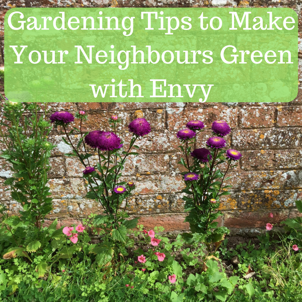 Gardening tips to make your neighbours green with envy for Gardening tips colorado
