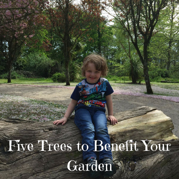 Five Trees to Benefit Your Garden