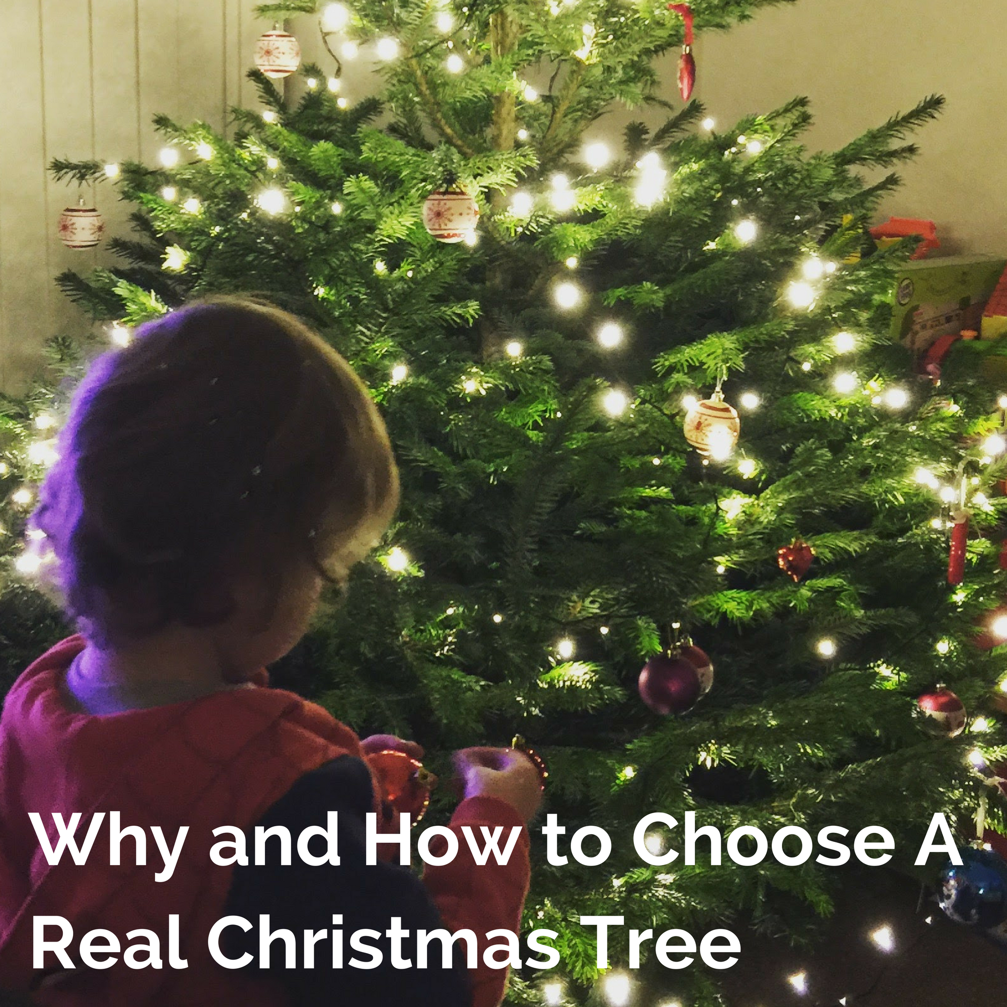 Why and How to Choose A Real Christmas Tree