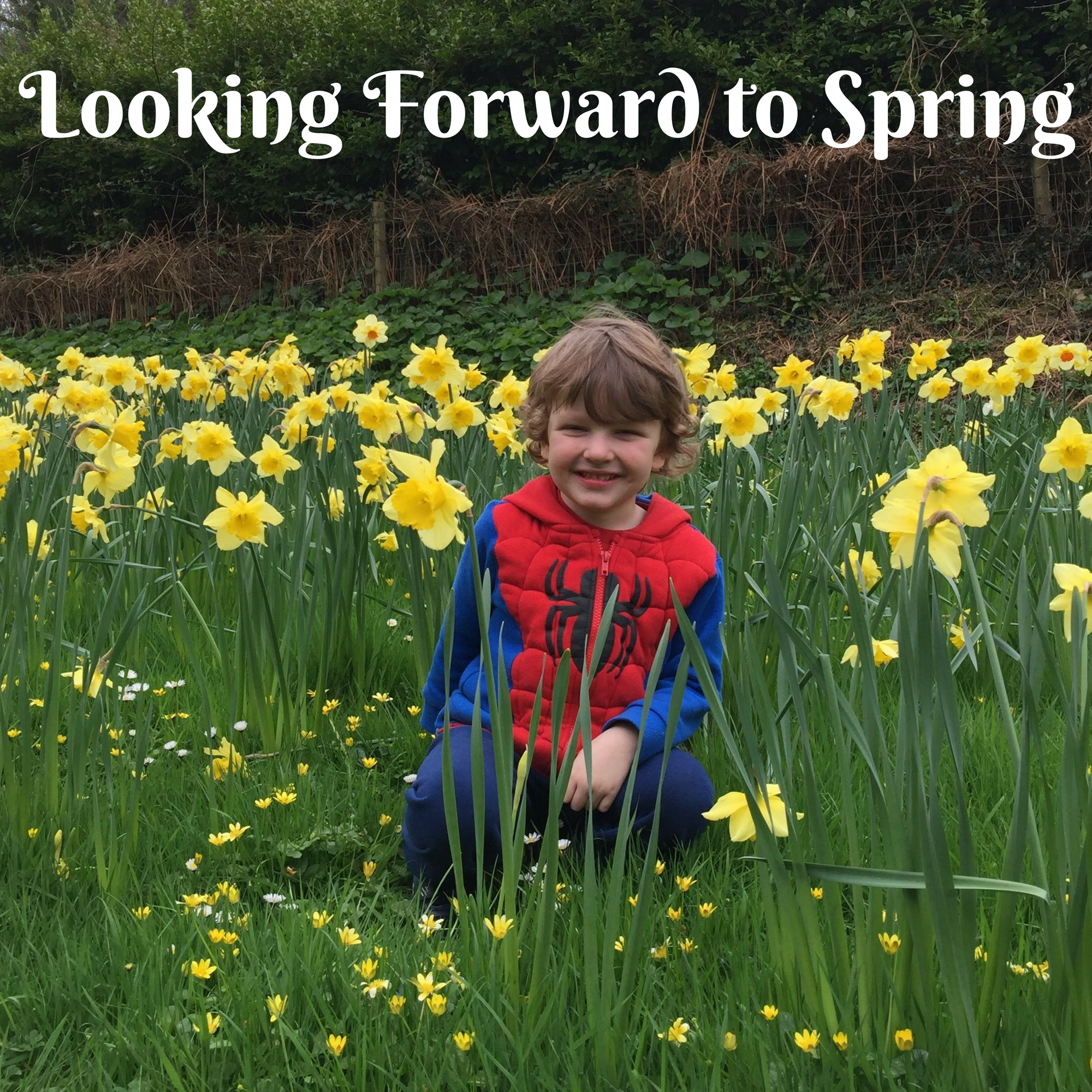 Looking Forward to Spring