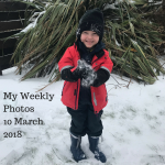 My Weekly Photos 10 March 2018