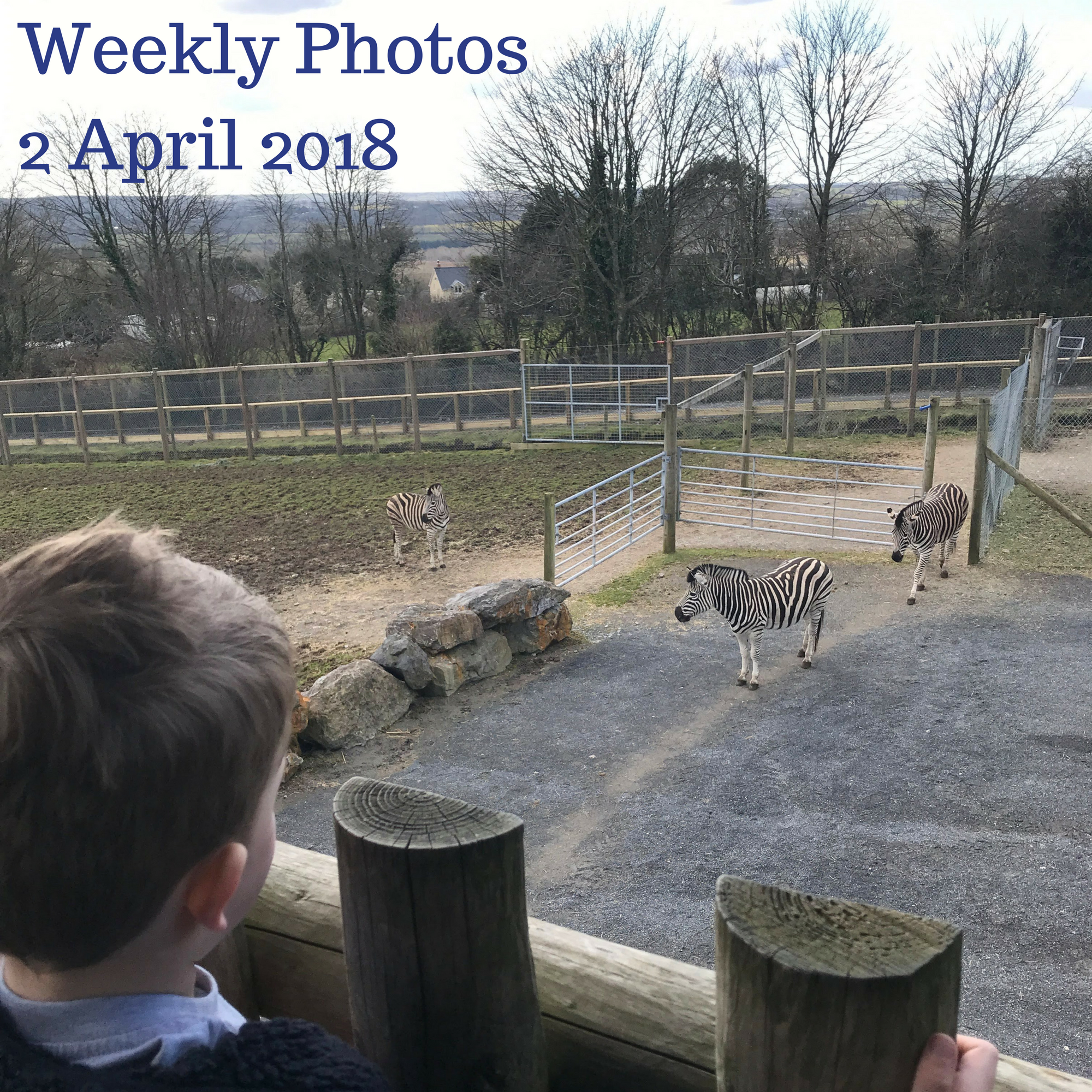 Weekly Photos 2 April 2018