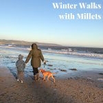 Winter Walks with Millets