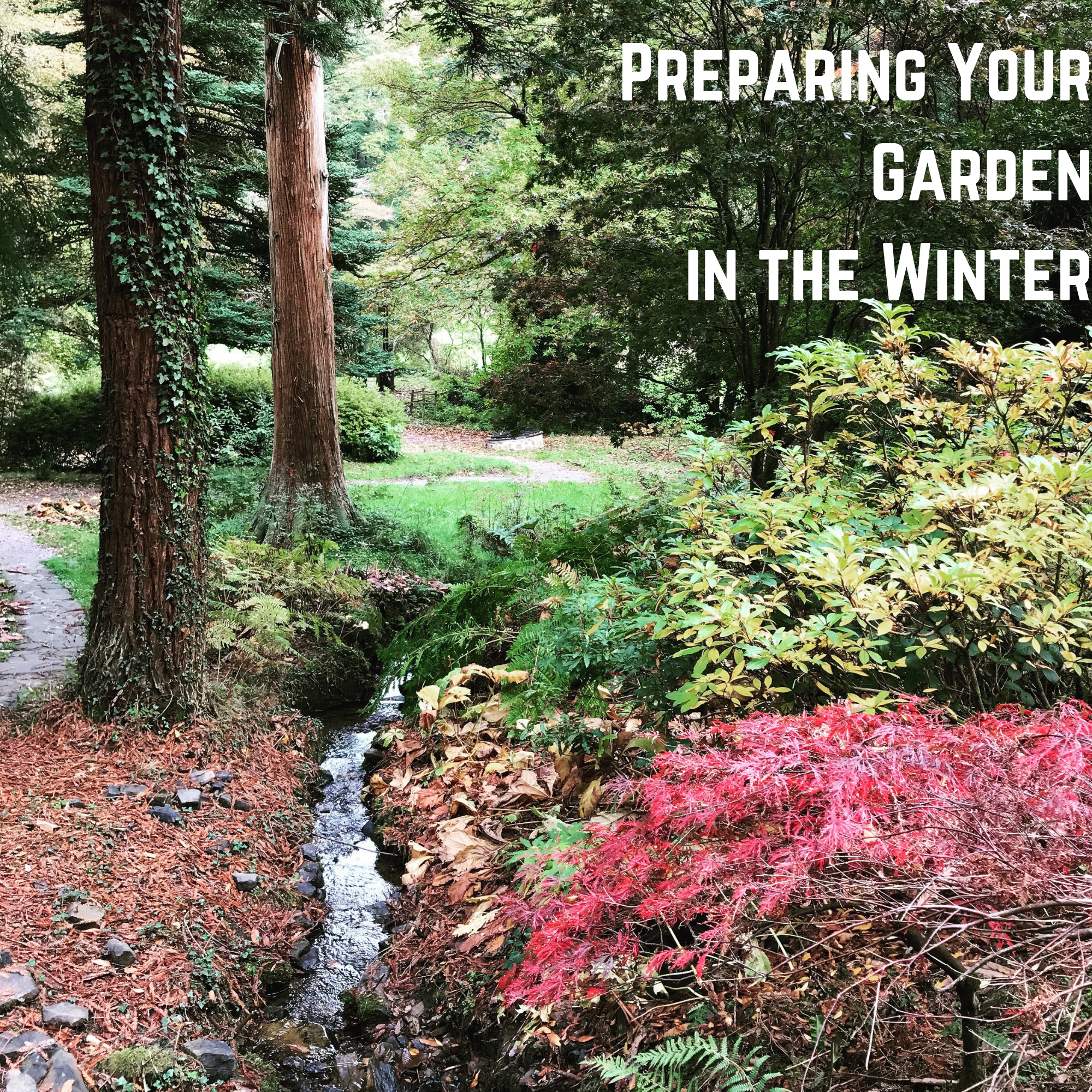 Preparing Your Garden in the Winter