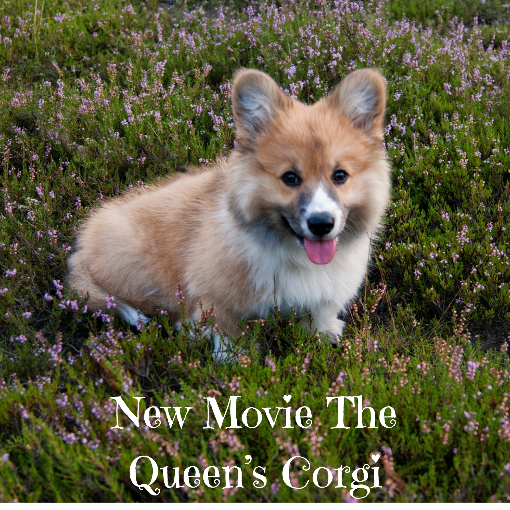 New Movie The Queen's Corgi