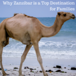 Why Zanzibar is a Top Destination for Families