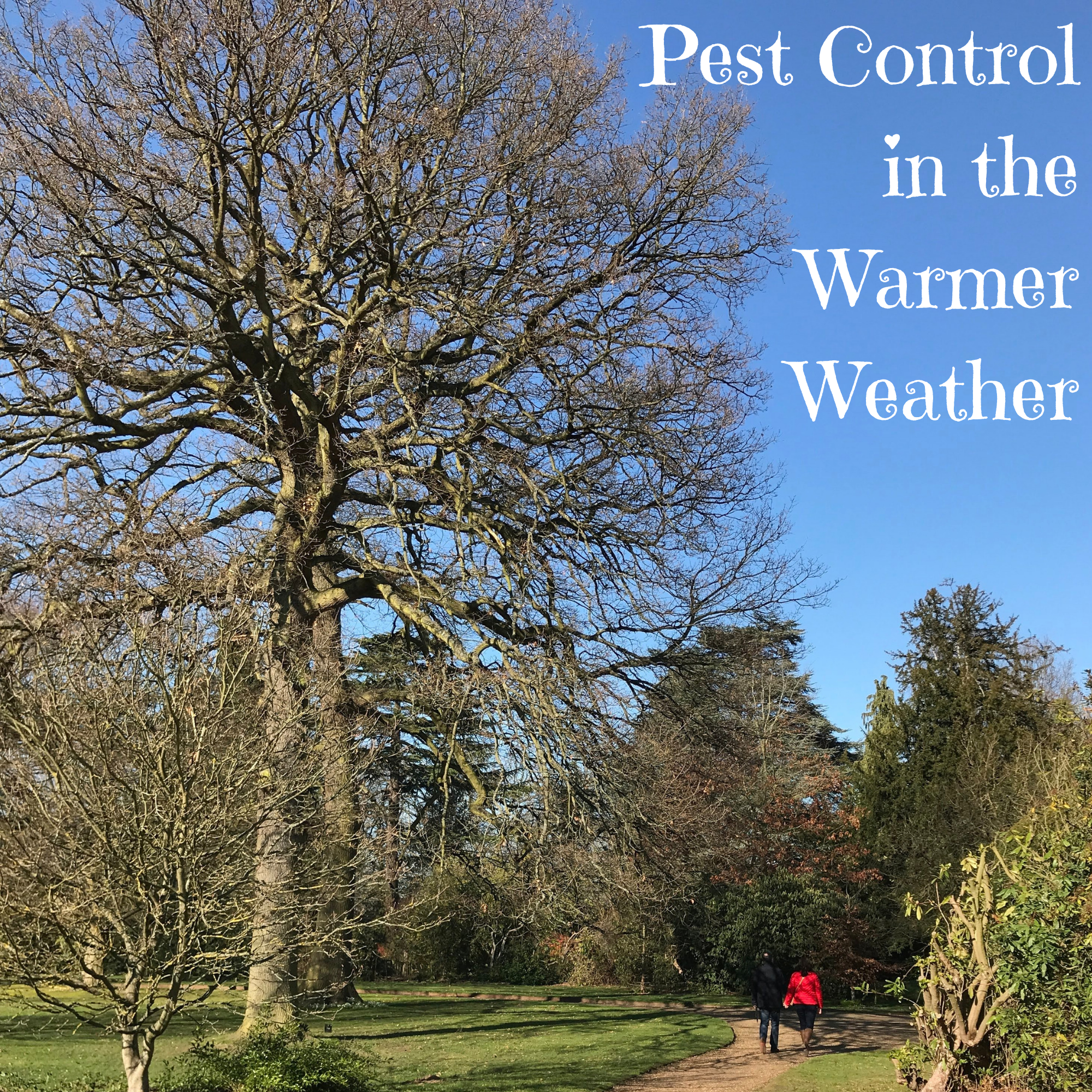 Pest Control in the Warmer Weather