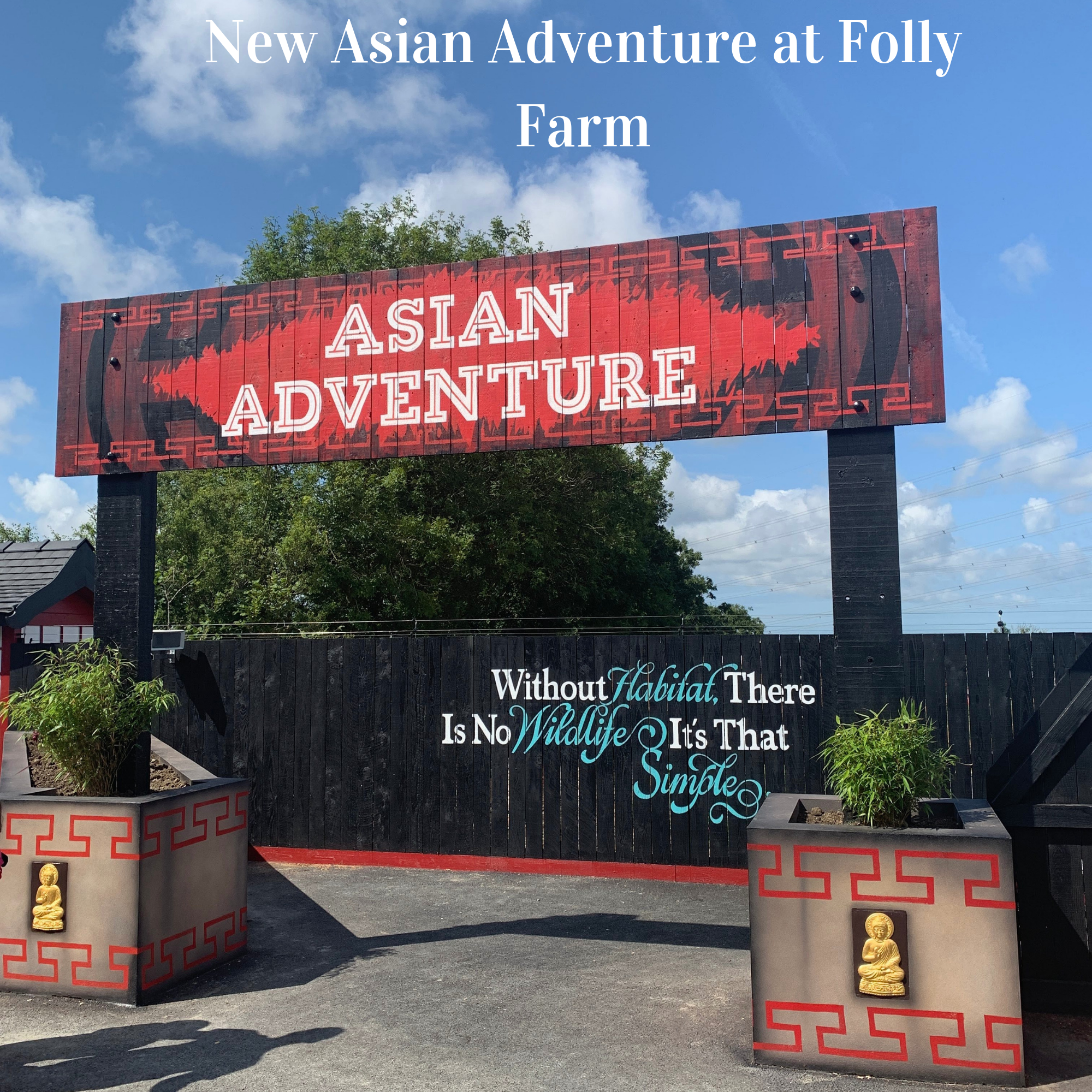New Asian Adventure at Folly Farm