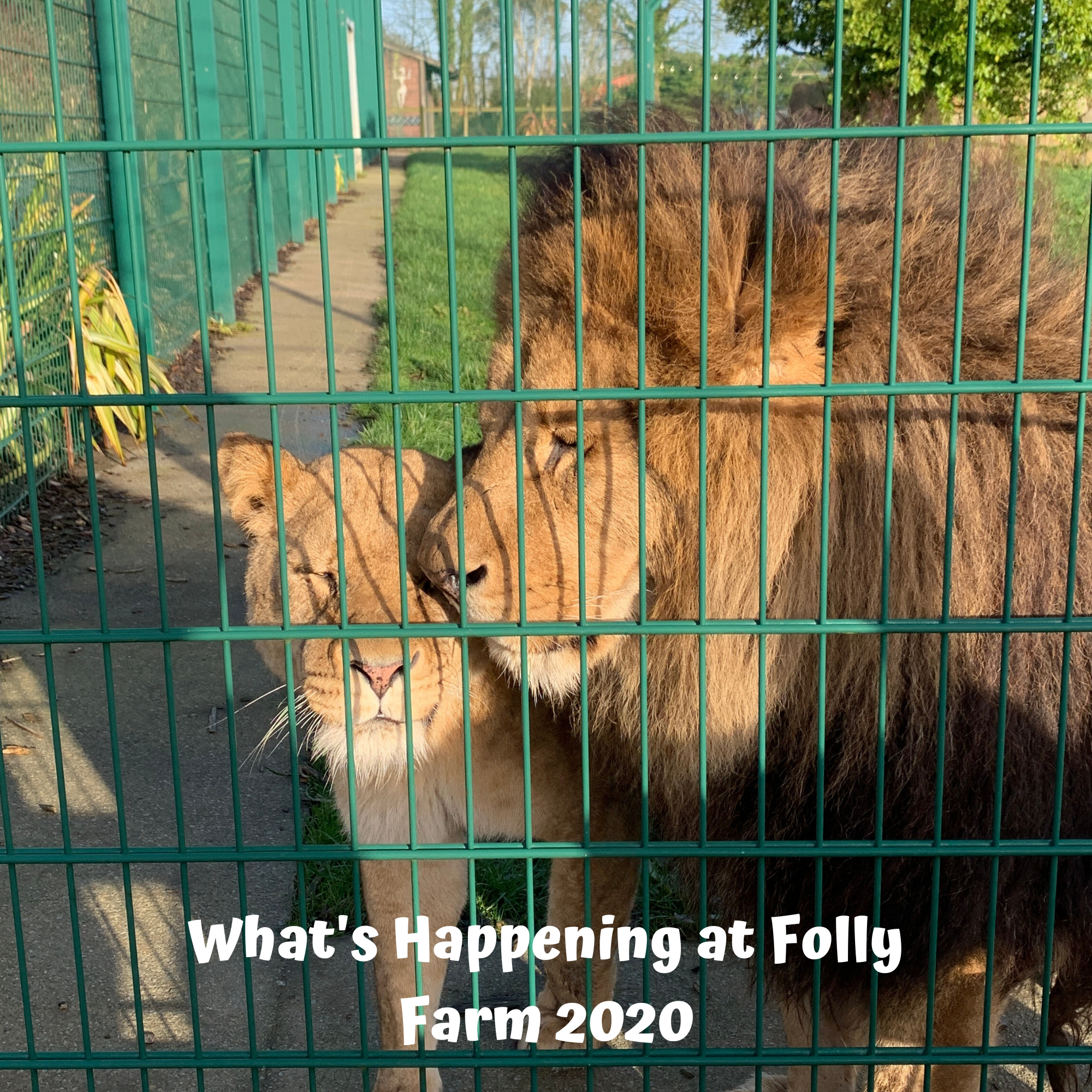 What's Happening at Folly Farm 2020
