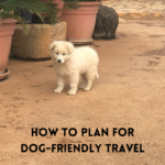 How to Plan for Dog-Friendly Travel
