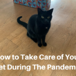 Take Care of Your Pet During The Pandemic